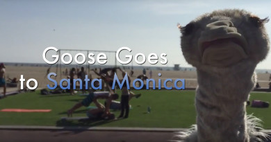 Goose-SantaMonica