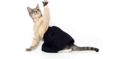 cat in clothes