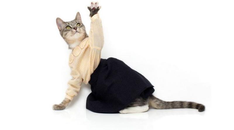educated cat - photo #12
