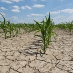 Opinion: I Miss the Drought