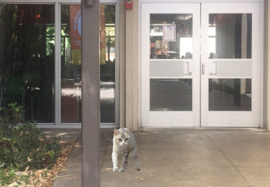 Report: EVKitty Now Bullying Transfer Students for Swipes
