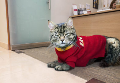 USC Mental Health Services Hire Therapy Cat For Students Who Miss Being Ignored at Home