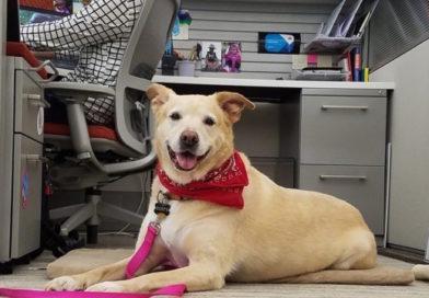 Neutered Office Dog Still Treated Better Than Unpaid Intern