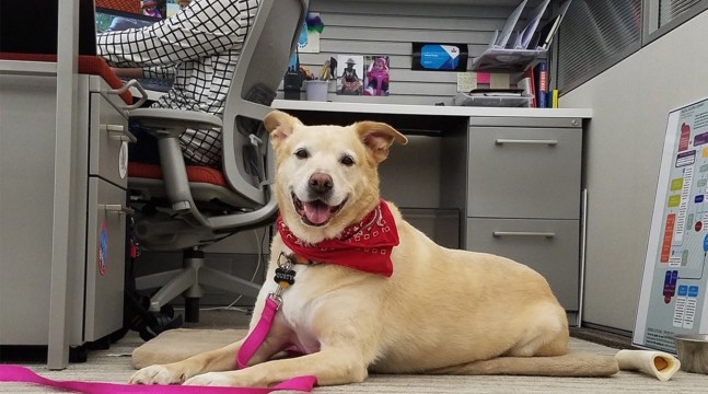 Take-Your-Dog-To-Work-Day-Office-Dog-At-Work-Desk