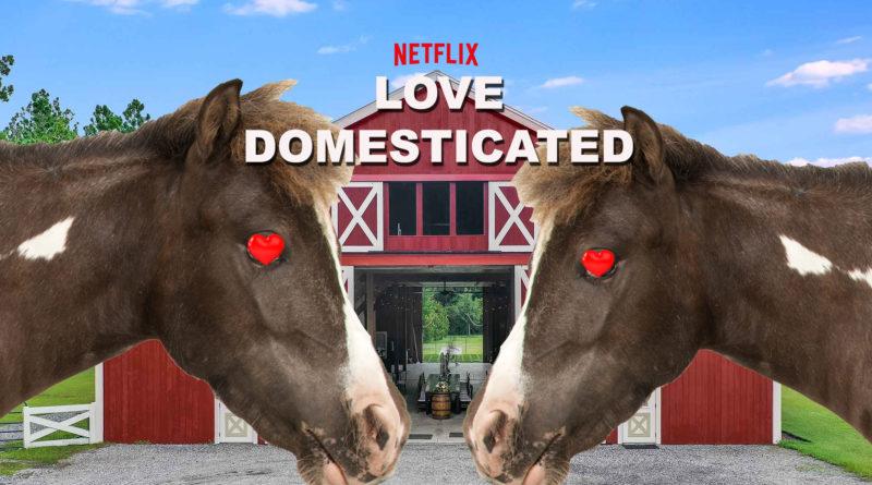 Domesticated Love