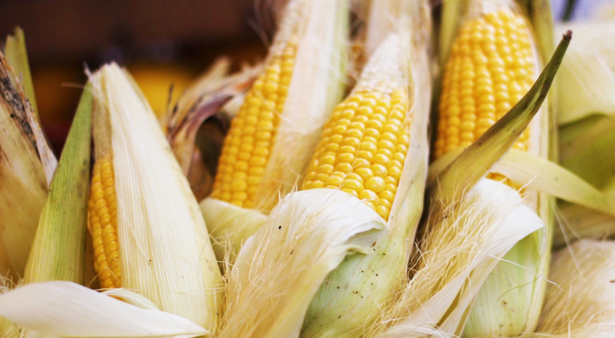 Corn is one great grain! Have you ingested corn in the past 48 hours?